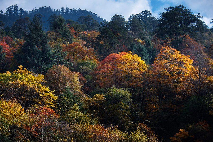 1、区域内峡谷深切,沟壑纵深,充沛的降雨和气候垂直分布,形成了区域小环境生态的丰富性和完整性。 2、景区内群山相连,秀峰林立,飞瀑流泉,跌水海子,空间博大,物种丰富,是野生动植物的天然基因库。 3、鹿池观景区、杜鹃湖生态步游道、鸦鹊河沿河生态步游道、银洞海垂钓区、湿地公园休闲区等,随心游。