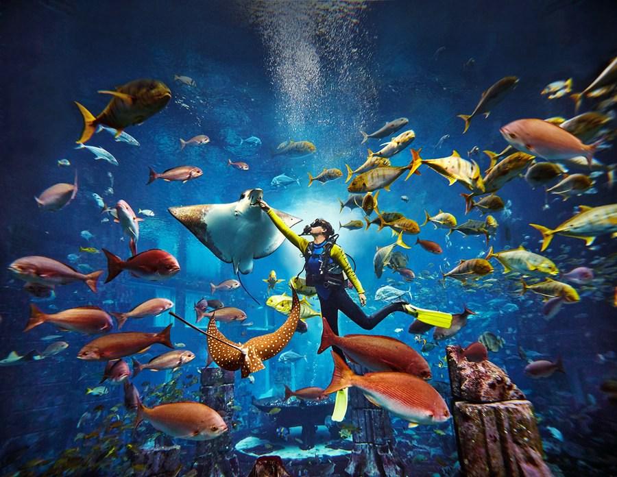 海南  三亚 亚特兰蒂斯失落的空间水族馆图片
