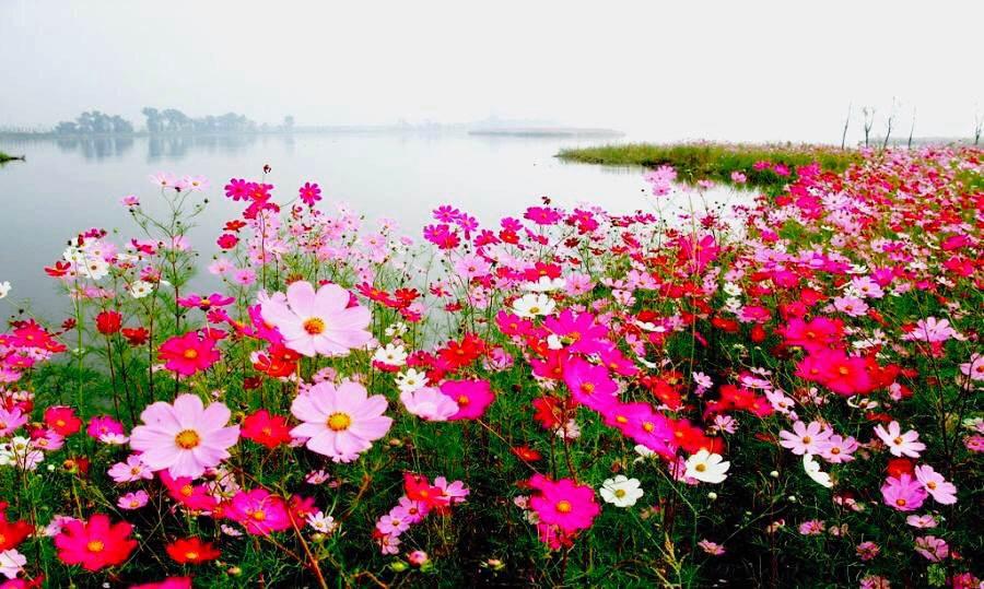 """景区将坚持""""生态旅游、产业拉动、健康发展、保护环境""""的原则,根据""""花卉文化、农林观光、休闲旅游""""三位一体的发展思路,因地制宜,六区一园的布局,致力于打造合肥""""花""""主题田园度假综合体。"""
