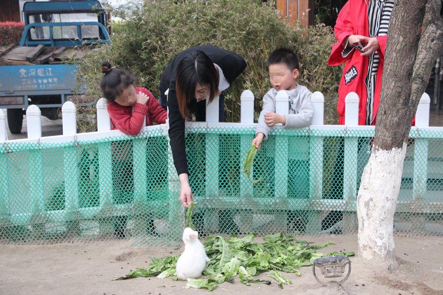 酒店养了可爱的小兔子,入住会赠送1袋胡萝卜供小朋友参与喂食,瞧