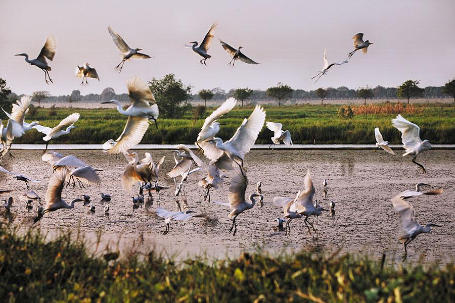【广州】2020年南沙湿地公园——【成人票】提前2小时预定